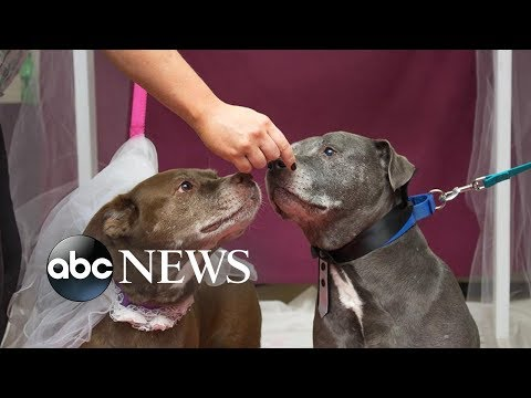 Fred And Angi - Senior Dogs Get Married In Shelter To Help Them Get Adopted Together