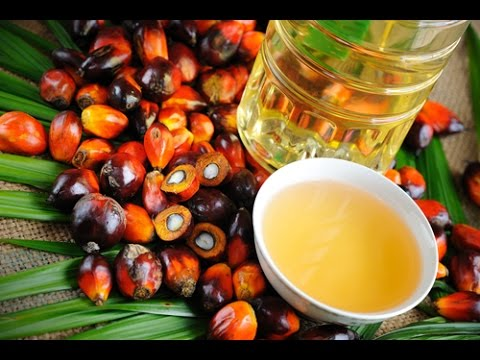 Palm Oil Market Size | Price | Industry Report, Trends & Outlook 2017-2022