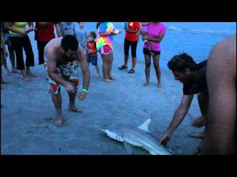 SHARK ATTACK North Myrtle Beach SC 2015