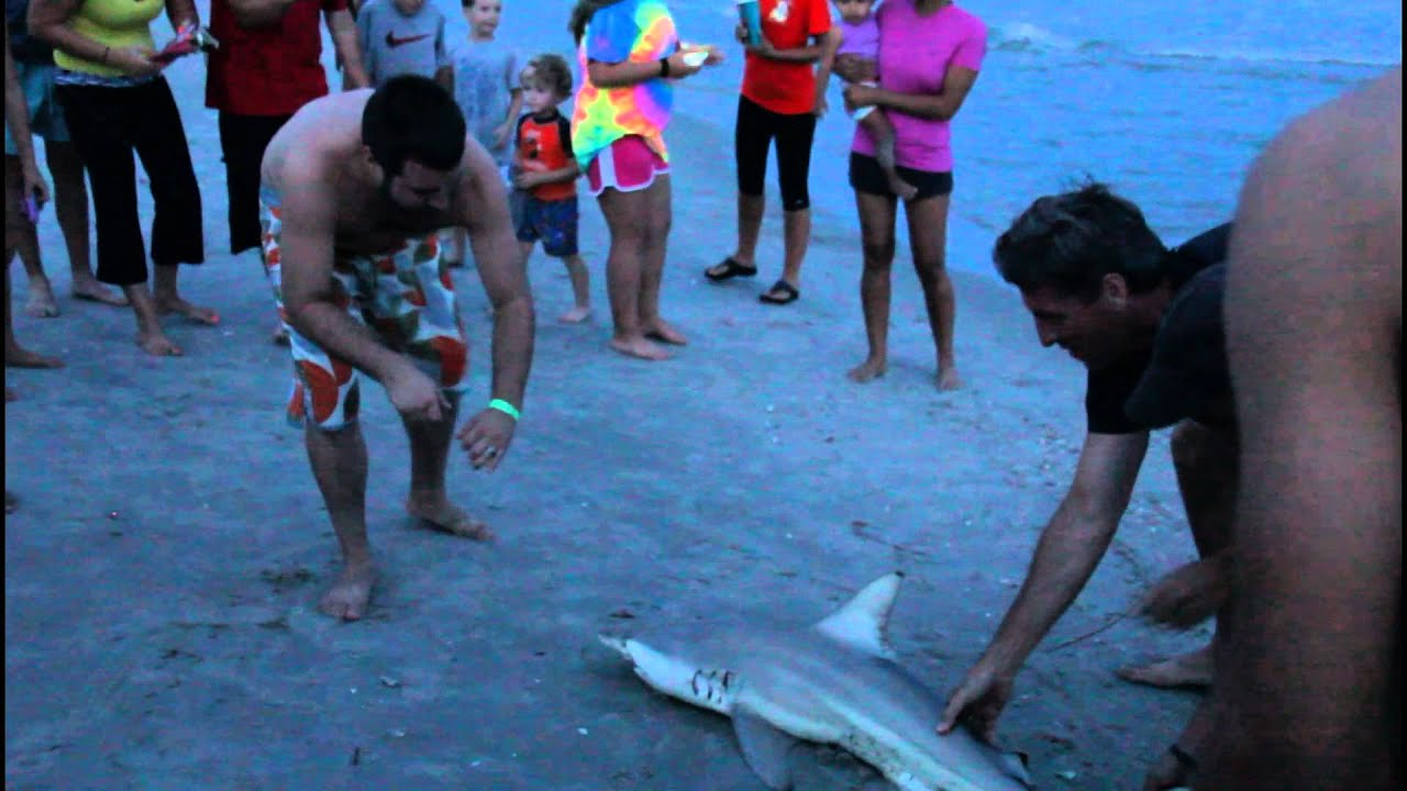 SHARK ATTACK North Myrtle Beach SC 2015