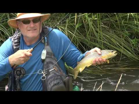 Hopper & Cricket Fly-Fishing in the Driftless