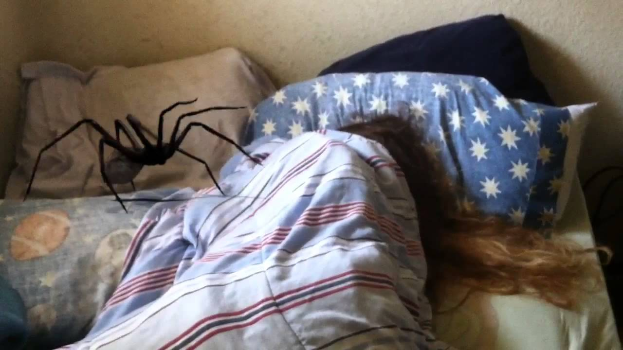 Giant spider sneaks into her bedroom youtube for How to keep spiders out of your bedroom