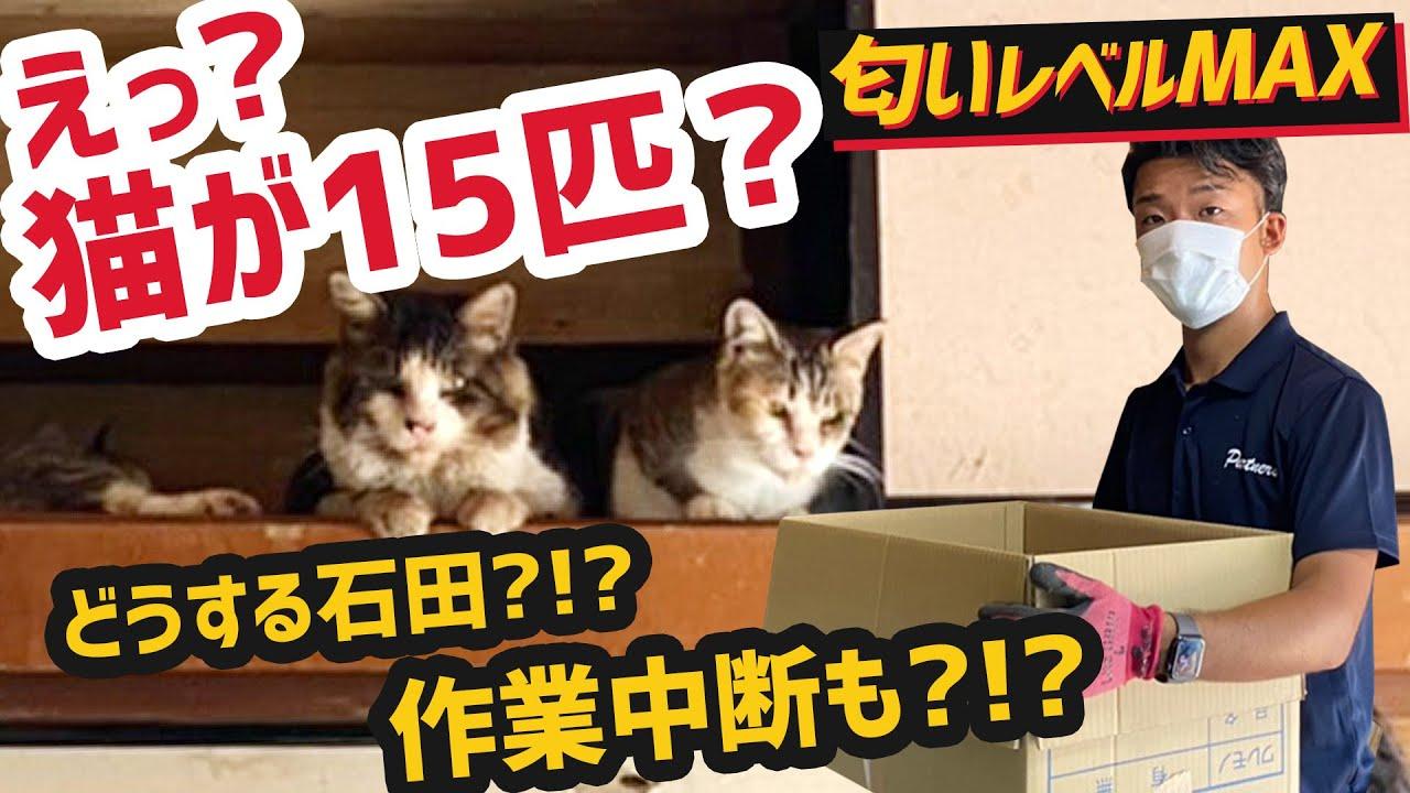10匹以上、一軒家の猫屋敷!ねこちゃんをケアしながら6名7時間の過酷な作業【毛と匂いとの闘い】
