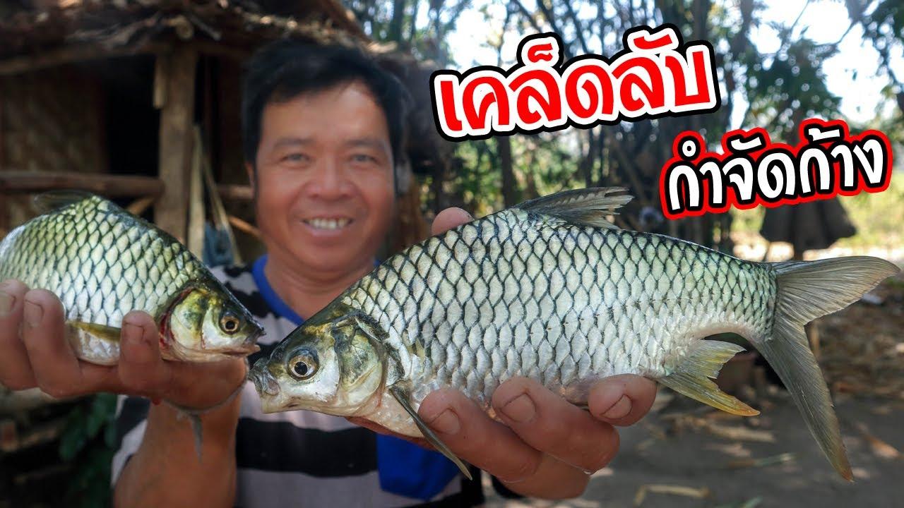 ทำอาหารในป่า เมนูปลาอ่อง สูตรครัวป่าไผ่ วิธีทำปลาตะเพียนไร้ก้าง l SAN CE