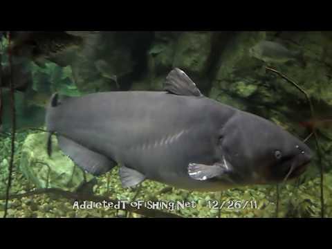 Bass Pro Shops Fish Tanks & Stream