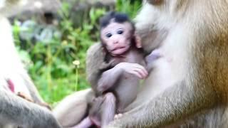 Very Lovely Newborn Monkey Janet