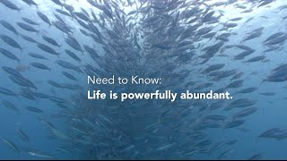 Abundance of Life in the Oceans