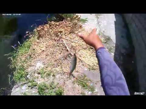Street Fishing for Oxeye Tarpon / Buan-buan on Ultralight