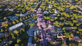 A purple paradise: The prettiest jacaranda-lined street in Pretoria