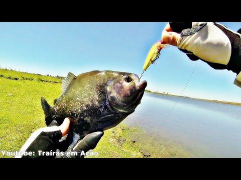 Pesca de Piranha (PALOMETA) e Saicanga com rasante de quero-quero!