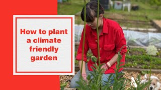 How to plant a climate friendly garden  |  Hubbub Investigates