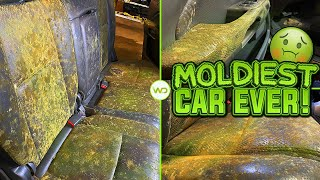 Deep Cleaning the MOLDIEST CAR EVER! | Satisfying Interior & Exterior BIOHAZARD Car Detailing