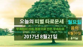 띠별 타로운세)오늘의 운세 2017년 8월21일