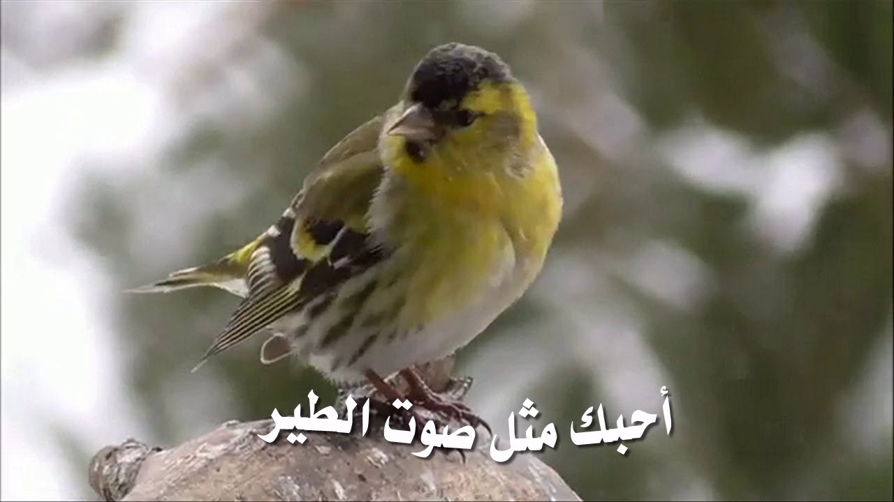 صباح الخير فهد الشهري🎤