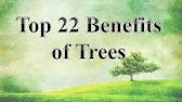 essay on save trees essay on importance of trees  6 01 importance