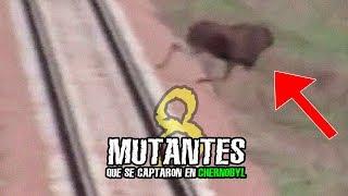 8 MUTANTES DE CHERNÒBYL CAPTADOS EN VIDEO