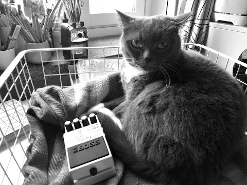 Cat Purr Ambient Drone Music