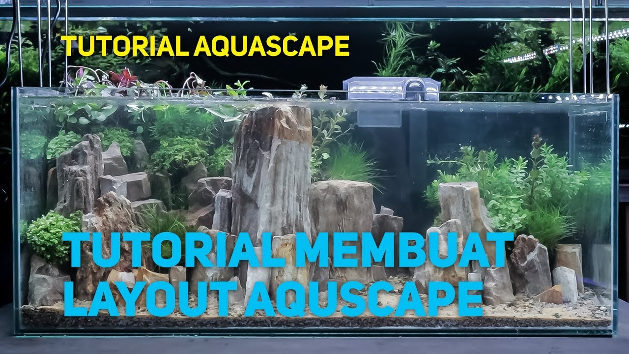 Setting Layout Aquascape Tutorial - YouTube