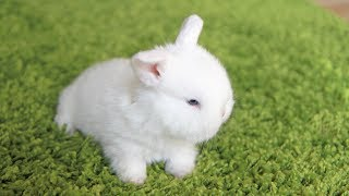 Cutest little bunny prison break!