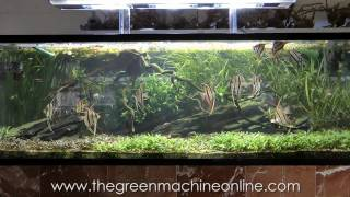 Aquascaping Shop Tour of The Green Machine