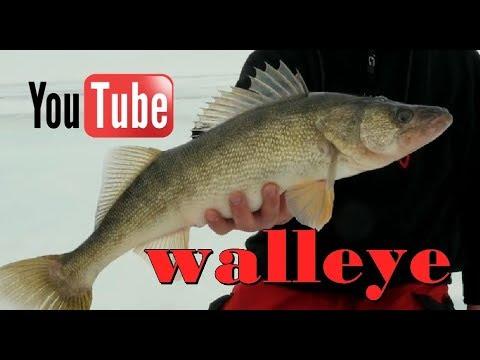 Ice Fishing *WALLEYE* At Boyd Lake, Loveland Colorado - #icefishing #5280adventures