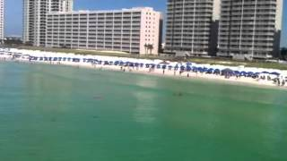 Hammerhead Shark at the Navarre pier/beach - GET OUT OF THE WATER
