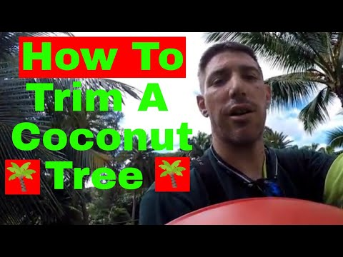 TRIMMING COCONUT TREES IN HAWAII Pt. 1