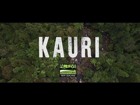 Ultimate North Island Adventure 'Kauri' Trip