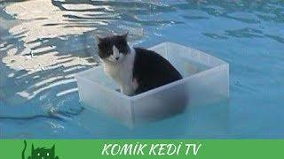 Birbirinden Komik Kediler 2017 - Gülme Garantili