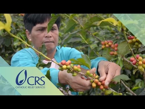 Agroforestry in Coffee Farming for a Sustainable Enterprise | CRS FARM Project