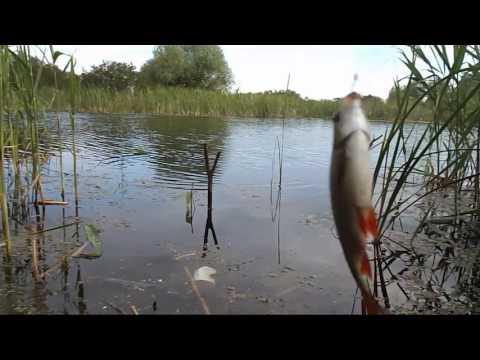 отчеты о рыбалке апрель 2017 рязанская область
