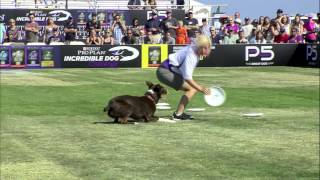 Flying Disc 1st Place  Incredible Dog Challenge 2015 Huntington Beach, CA