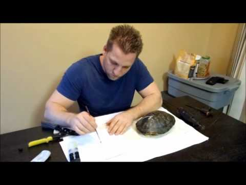 The Reptile Guy - Fixing a broken turtle shell