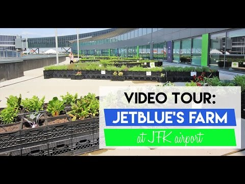 A Tour of JetBlue's Farm at JFK Airport (Facebook Live Video)