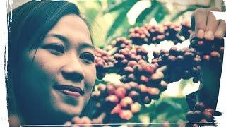 Sridonoretno Coffee | Api TV