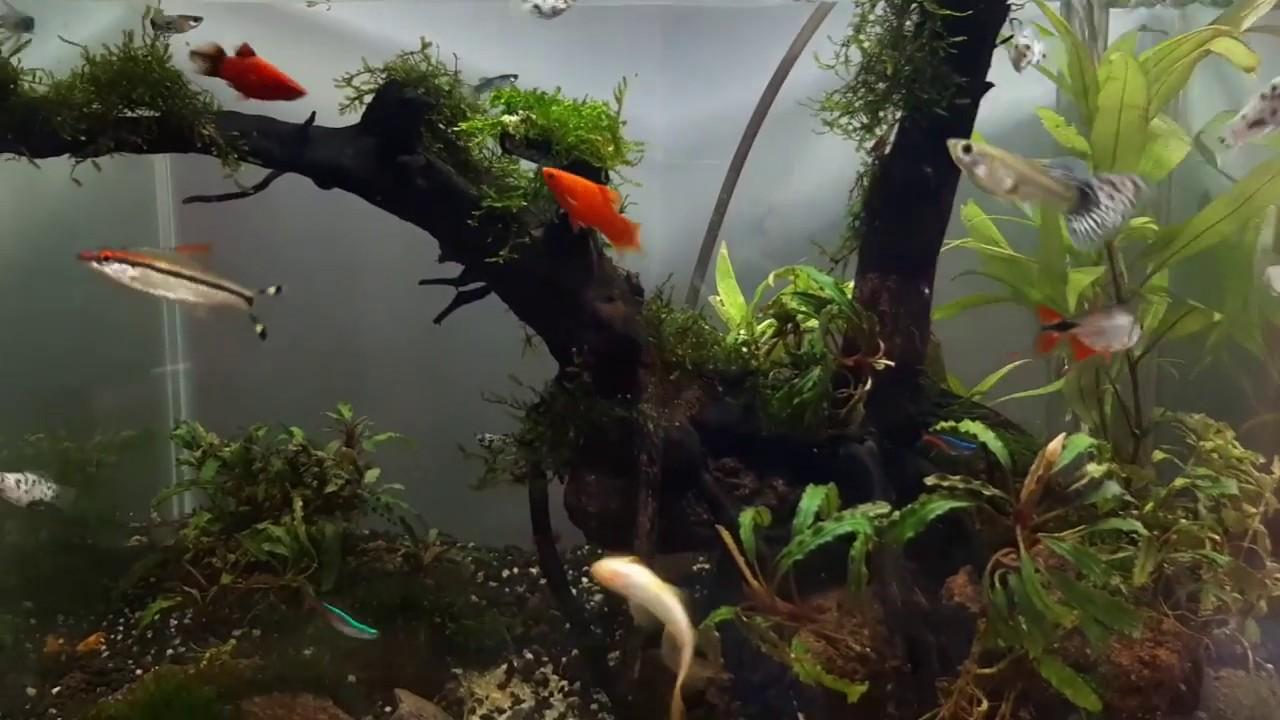 tank aquascape untuk pemula dan low buget non Co2 - YouTube