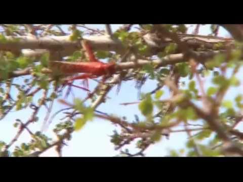 Mauritania, tres colores: Rojo (Expedición Mauritania 2004 de Espacio Protegido (1/3)