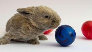 #934. Кролики и зайцы (В мире животных)