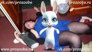 Теща и хитрый рыжий кот Прикол от Zoobe Зайки Домашней Хозяйки