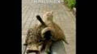 very funny cats for more click on link in blue on right thumbnail