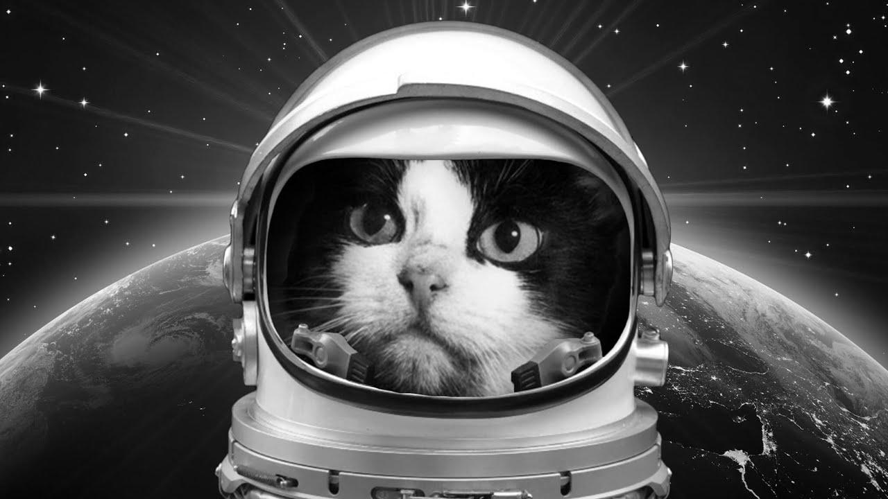 урбан картинки животные в космосе сныть конце июня