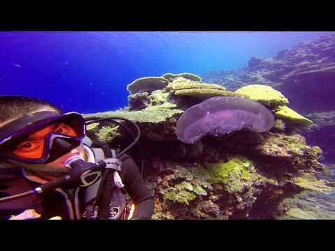 Palau Scuba Diving 2015 pt 3
