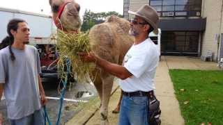 Call 815-600-6464 Animal Rental, Animal Rentals Chicago, US, United States of America, USA, American