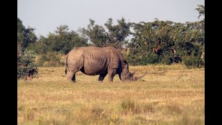 RHINO poaching decline