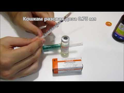 Ceftriakson.ru: как разводить цефтриаксон (дозировка, инструкция, уколы)
