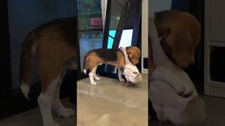 犬とアヒルが超仲良しで…見てるこっちが照れる!(動画)