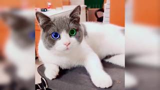 Cat Fails -Funny Cat Videos 2020 -Baby Cat , Funny Video Animals