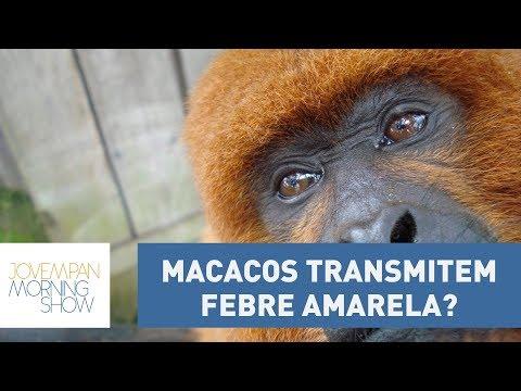 Macacos Podem Transmitir Febre Amarela? Infectologista Jean Gorinchteyn Explica