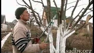 Правильная обрезка яблони.(, 2013-03-04T14:39:01.000Z)