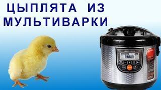 Выводим Цыплят в Умной Мультиварке REDMOND RMC-M222S. Какую Купить Йогуртницу